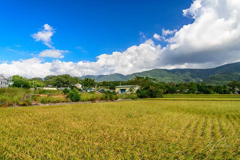 台東縣池上鄉的稻田